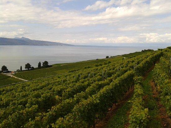 Hotel Prealpina: verdens naturarv vinmarker