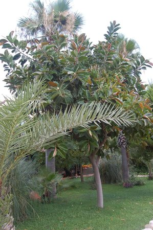 Sultan Beldibi : jardin