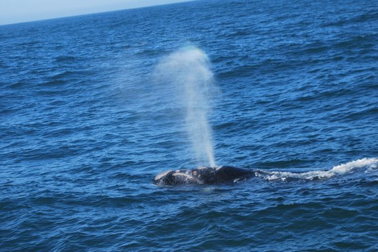 Whale Watchers Hermanus: Whale Spray