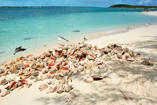 Stocking Island Conch Razze E