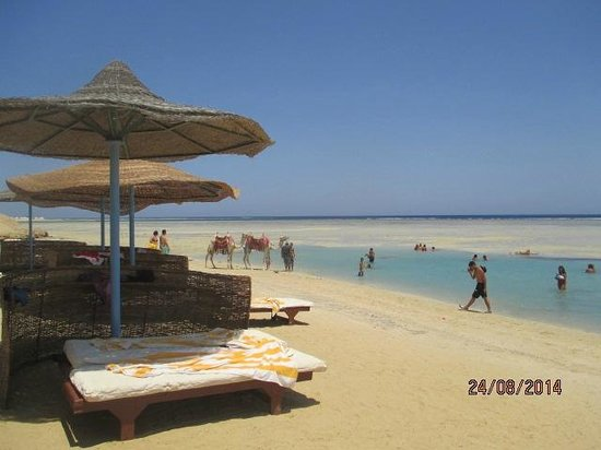 Blue Reef Red Sea Resort : spiaggia