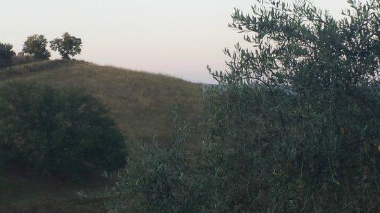 Podere Santa Maria: Terreni intorno