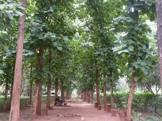 Parc national du Mali, Bamako : avenue of teak trees