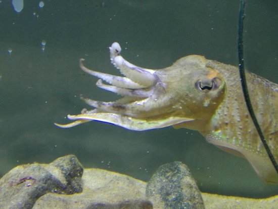 twin pearls - Picture of Anglesey Sea Zoo SW Mor Mon, Brynsiencyn ...