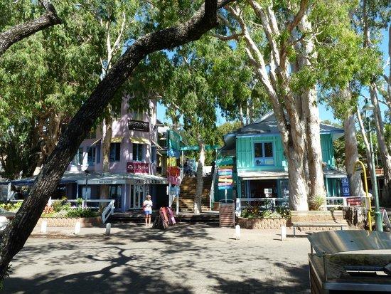 Palm Cove Beach : palm cove