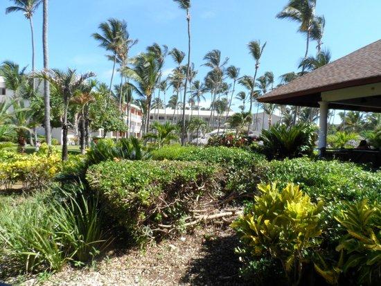 VIK Hotel Arena Blanca: Jardines
