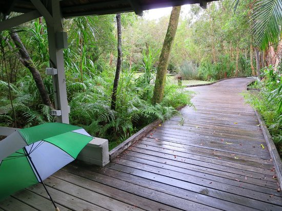 The Byron at Byron Resort & Spa: walkways through the rainforest setting