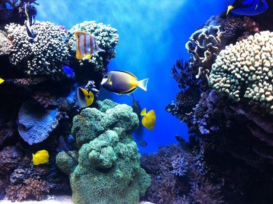 Bal Das Sardinhas Picture Of Monterey Bay Aquarium