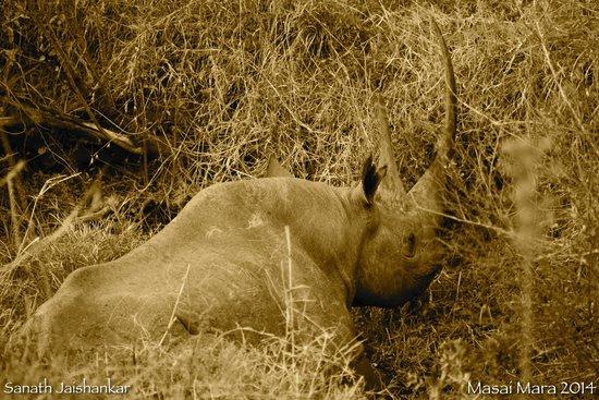 Mara Explorer Camp: Black Rhino