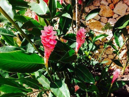 Grand Bahia Principe Cayacoa : Végétation on resort