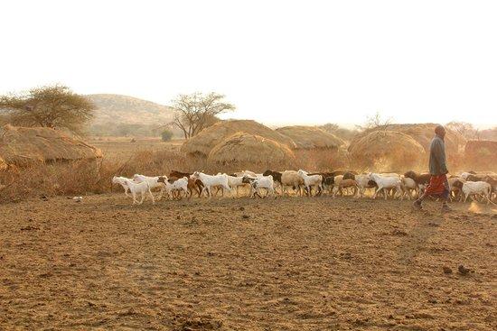 Ndarakwai Ranch Camp: Massai Village
