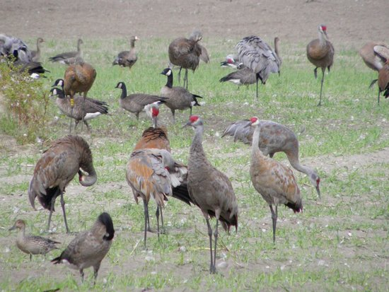 Creamer's Field Migratory Waterfowl Refuge : miscellanea