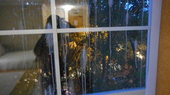 Quality Inn Downtown Inner Harbour: View from window into tree with bird poo