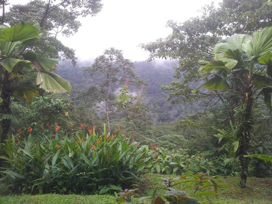Lands in Love Hotel & Resort (Tierras Enamoradas): The morning's  view from the room