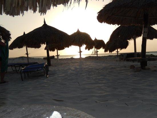 Divi Aruba Phoenix Beach Resort: beach