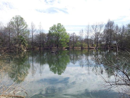 San Antonio Botanical Garden : pond in gardens, has lots of turtles