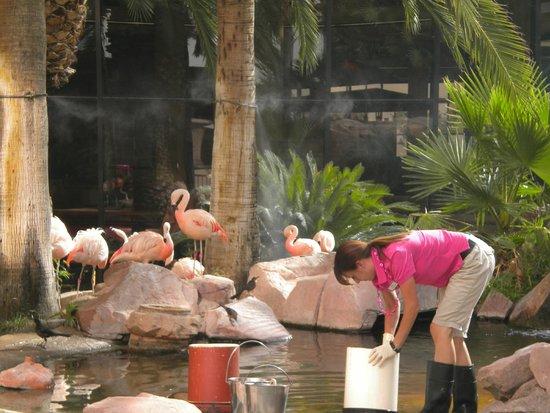 Flamingo Las Vegas Hotel & Casino: Feeding the Flamingos