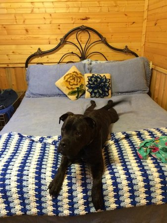 Hoof Prints Ranch: One of our dogs on the bed