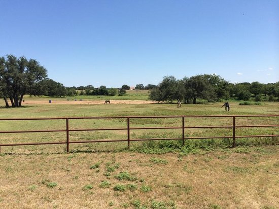 Hoof Prints Ranch: Horses grazing