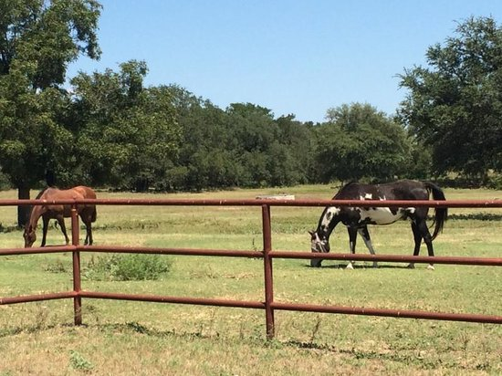 Hoof Prints Ranch: Horses maybe 30 feet from front porch