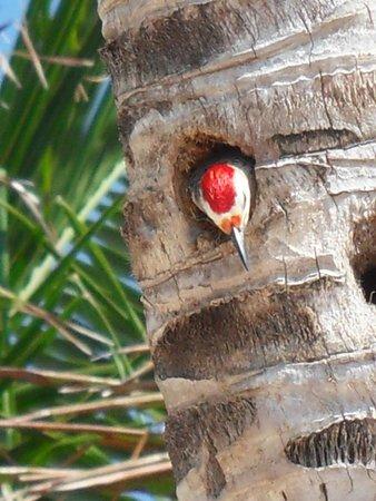 PavoReal Beach Resort Tulum: La stupenda fauna sulla spiaggia del resort !!!