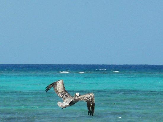PavoReal Beach Resort Tulum: Il colore del mare davanti al resort......!