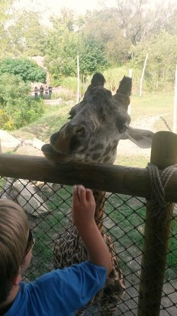 "Cincinnati Zoo & Botanical Garden: Feeding the Giraffe a ""cracker"""