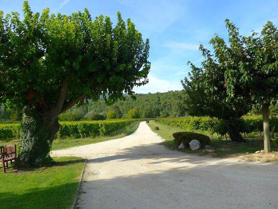 Domaine La Garelle: The entrance, through the vineyards