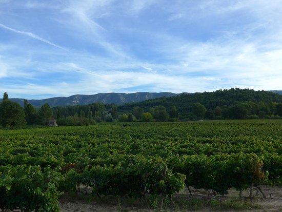 Domaine La Garelle: Nature's bounty