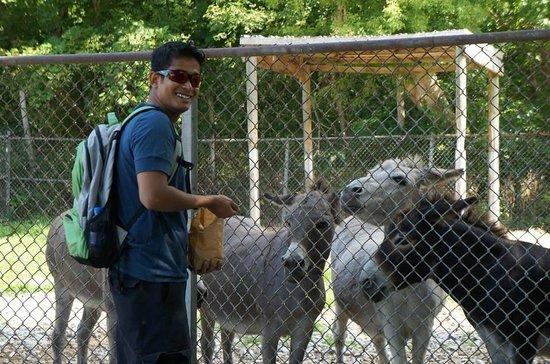 Lagoon Deer Park: Donkeys...