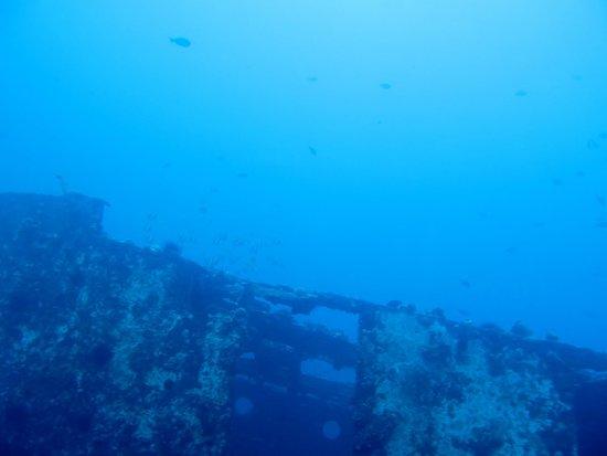 Atlantis Submarines Waikiki: view from the sub