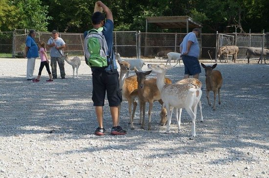 Lagoon Deer Park: They will grab your food bag if you aren't careful..