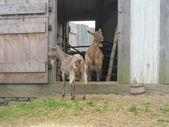 Fortaleza de Luisburso, Lugar Histórico Nacional: Friendly Farm Animals