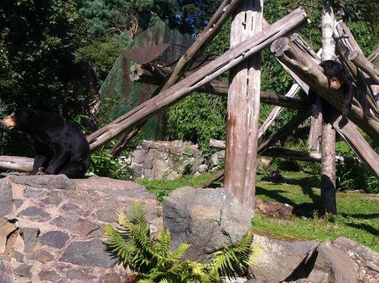 Edinburgh Zoo: Lazy bear!