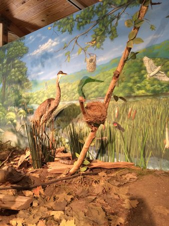 Wildwood Park: A fun educational experience