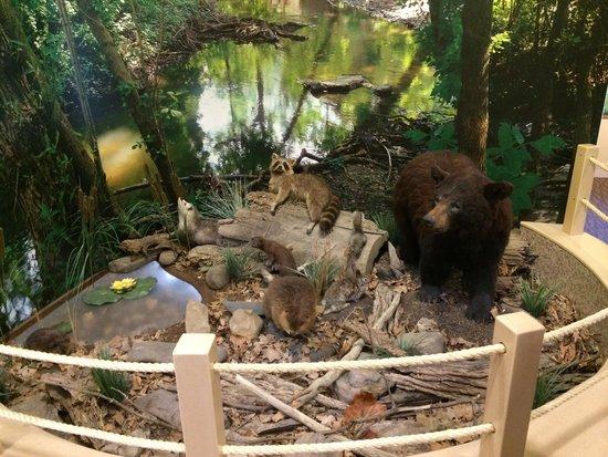 Wildwood Park: The lair