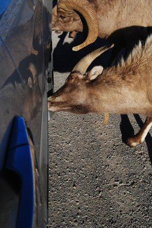 National Elk Refuge : car wash