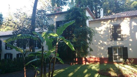 Quinta da Bela Vista: Banana plant