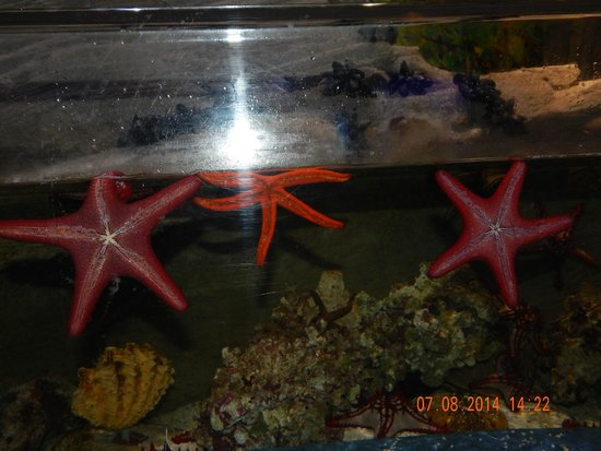Dubai Aquarium & Underwater Zoo: Star Fish