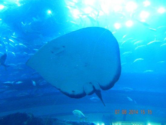 Dubai Aquarium & Underwater Zoo: Fish