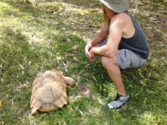 Kentucky Down Under Adventure Zoo: Aaron with Tortoise