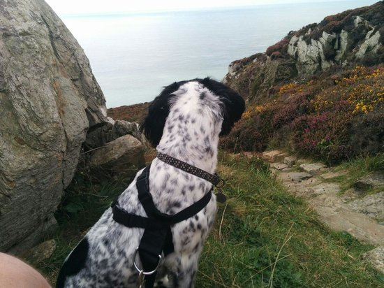 South Stack Cliffs RSPB Reserve : Jack taking in the great views
