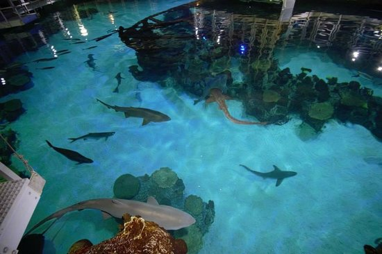 All The Different Sharks In The Aquarium Picture Of