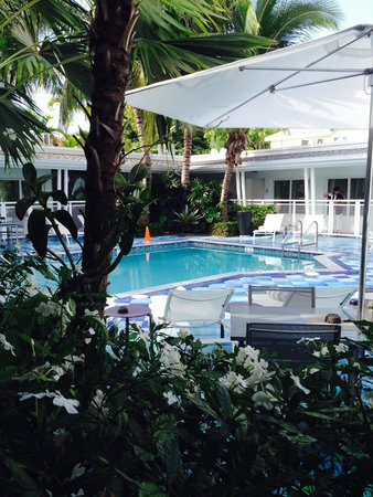 Orchid Key Inn : Pool Photo