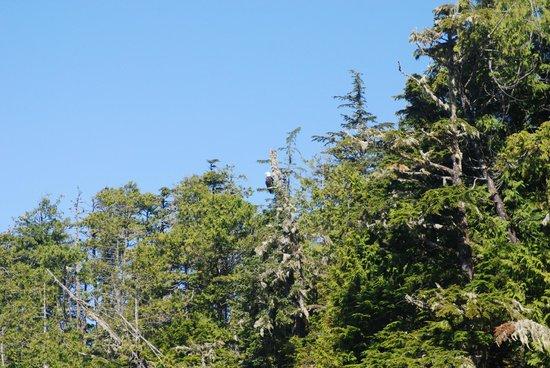 Terrace Beach Resort: View of an eagle