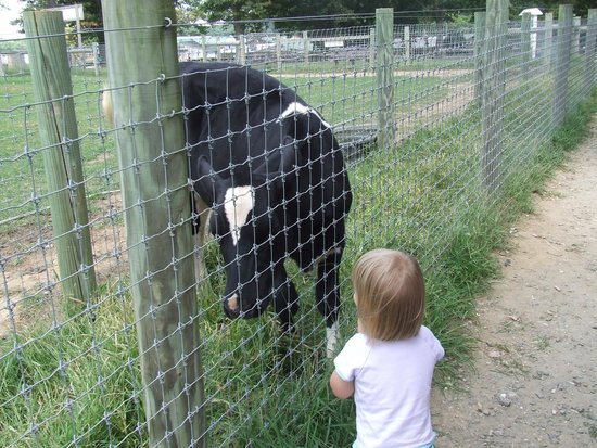 Linvilla Orchards: Up close & personal