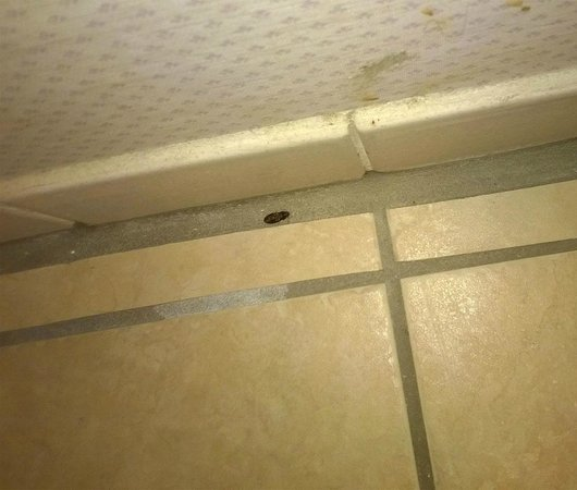 Red Roof Inn & Suites Cave City: More Bugs