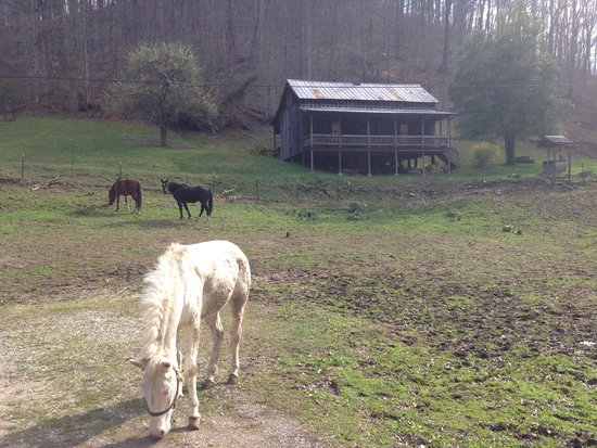 Paintsville, KY: Horses at Loretta Lynn's birthplace