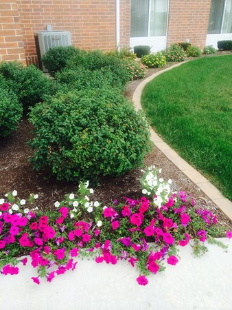 Fairfield Inn & Suites Ottawa Starved Rock Area : Nice flowers around entrance!