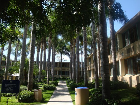 Sheraton La Jolla Hotel: Rooms and trees